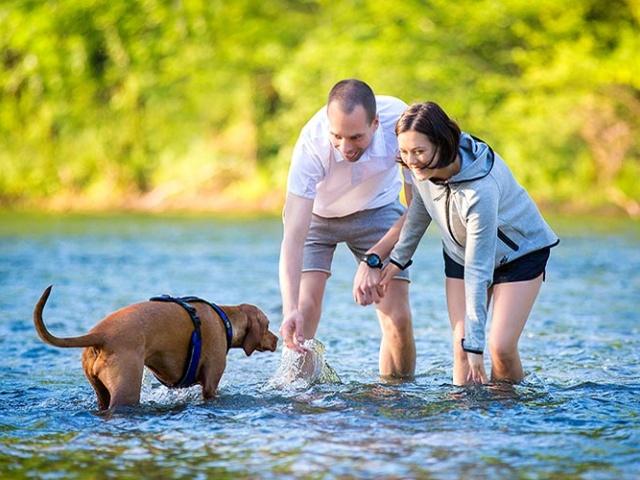 Ideja za izlet: Vikend s psom na Kolpi